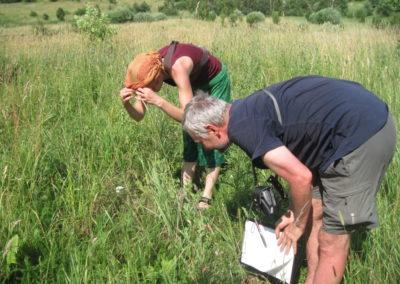 Rozpoznawanie dzikich roślin jadalnych